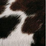Pelle con pelo pezzato Bianco , Nero e Marrone